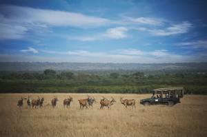 Masai Ngrende Savannah